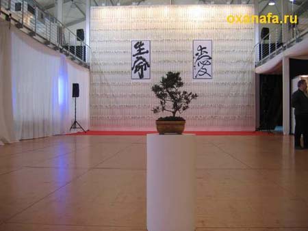 фестиваль японской культуры 'Сакура'